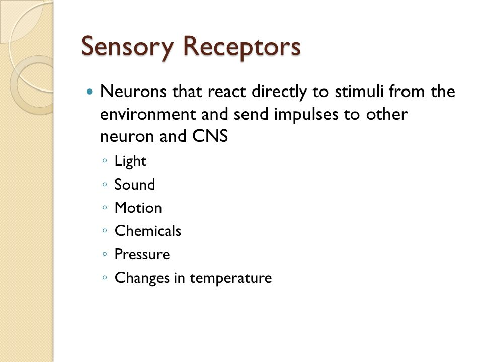 Sensory Receptors Neurons that react directly to stimuli from the environment and send impulses to other neuron and CNS ◦ Light ◦ Sound ◦ Motion ◦ Chemicals ◦ Pressure ◦ Changes in temperature