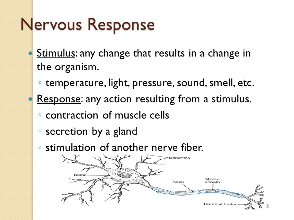 5 Nervous Response Stimulus: any change that results in a change in the organism.
