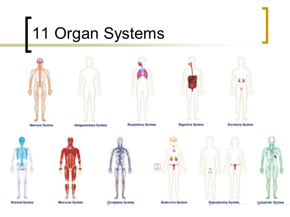 College Biology Human Body Systems Chapters Ppt Download