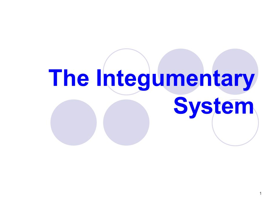 The Integumentary System 1