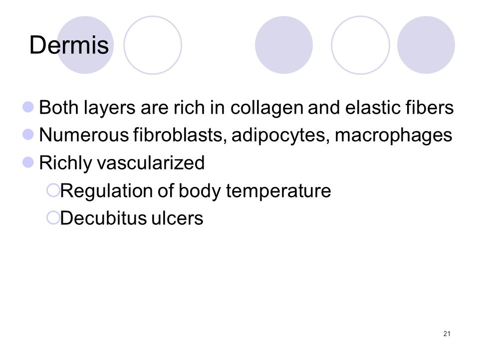 Dermis Both layers are rich in collagen and elastic fibers Numerous fibroblasts, adipocytes, macrophages Richly vascularized  Regulation of body temperature  Decubitus ulcers 21