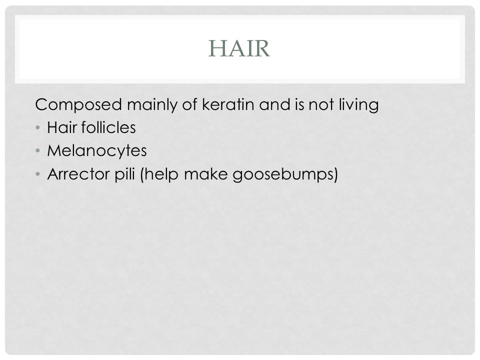 HAIR Composed mainly of keratin and is not living Hair follicles Melanocytes Arrector pili (help make goosebumps)