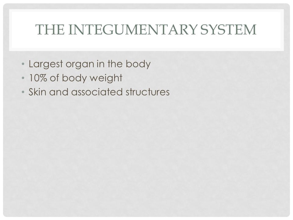 THE INTEGUMENTARY SYSTEM Largest organ in the body 10% of body weight Skin and associated structures