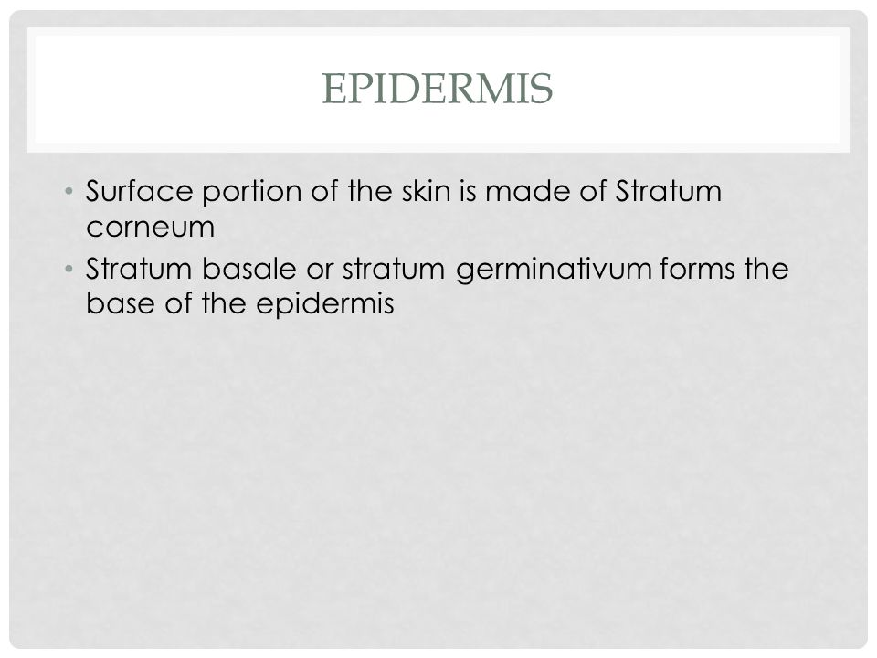 EPIDERMIS Surface portion of the skin is made of Stratum corneum Stratum basale or stratum germinativum forms the base of the epidermis