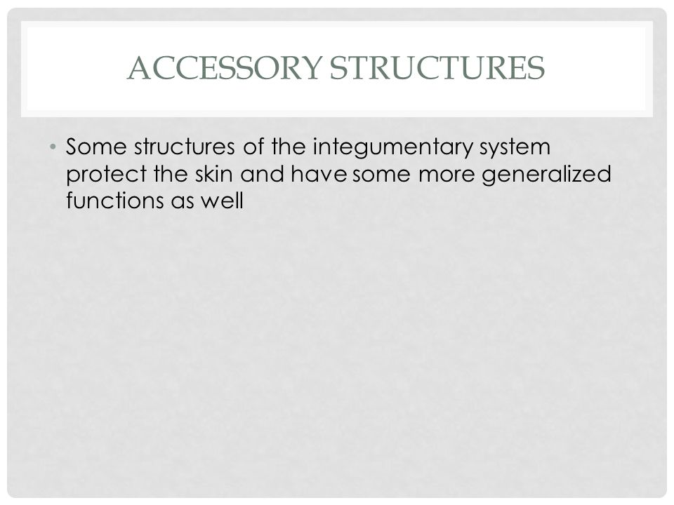 ACCESSORY STRUCTURES Some structures of the integumentary system protect the skin and have some more generalized functions as well