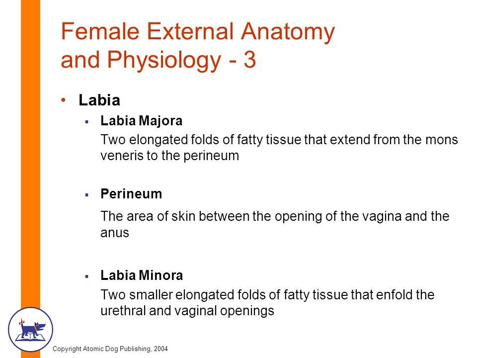 Copyright Atomic Dog Publishing, 2004 Chapter Three Female Anatomy ...
