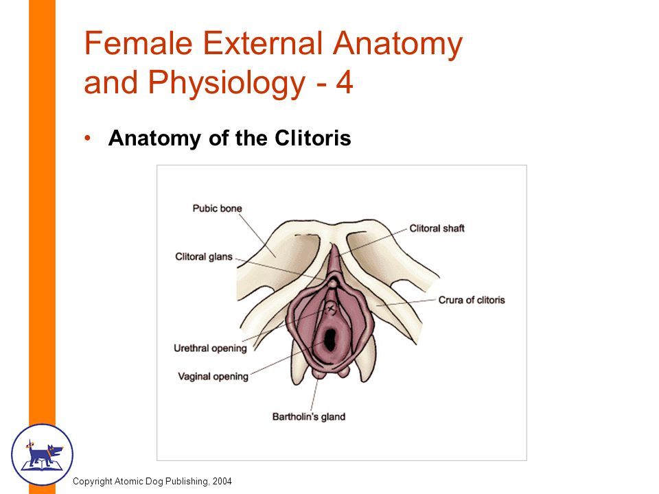 Copyright Atomic Dog Publishing, 2004 Chapter Three Female Anatomy ...