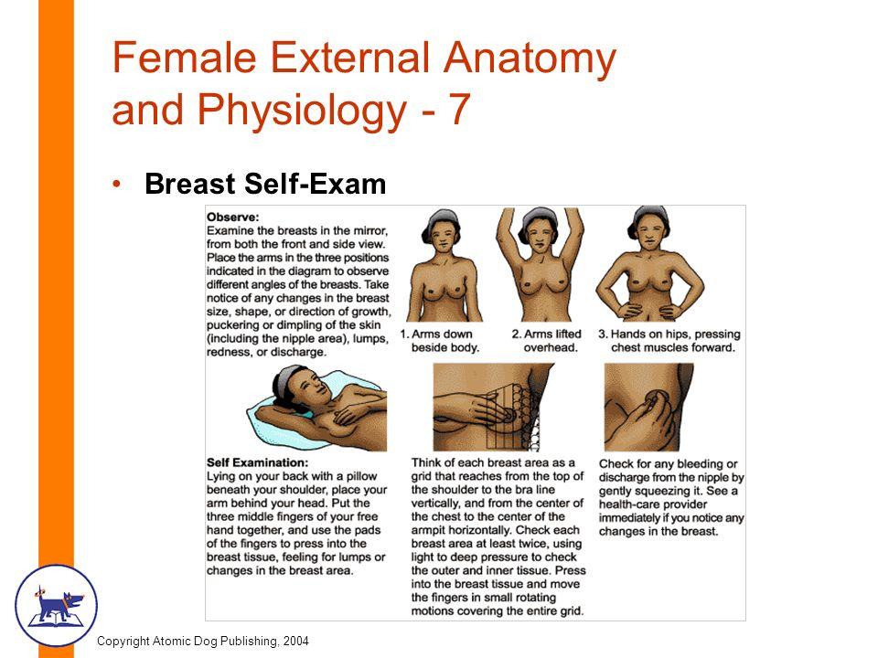 Copyright Atomic Dog Publishing 2004 Chapter Three Female Anatomy