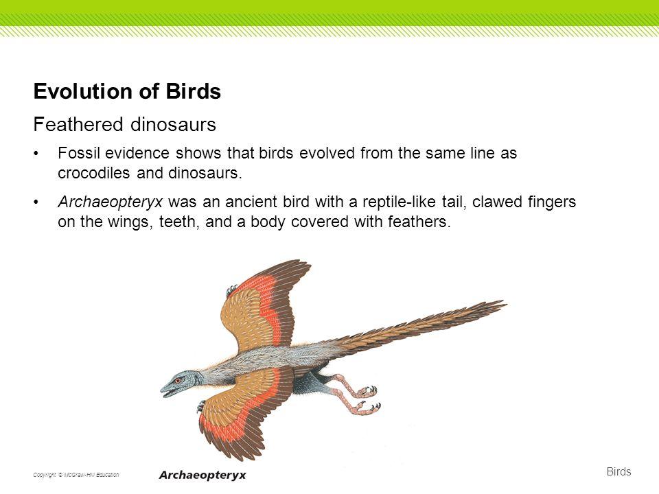 Birds as glorified reptiles.