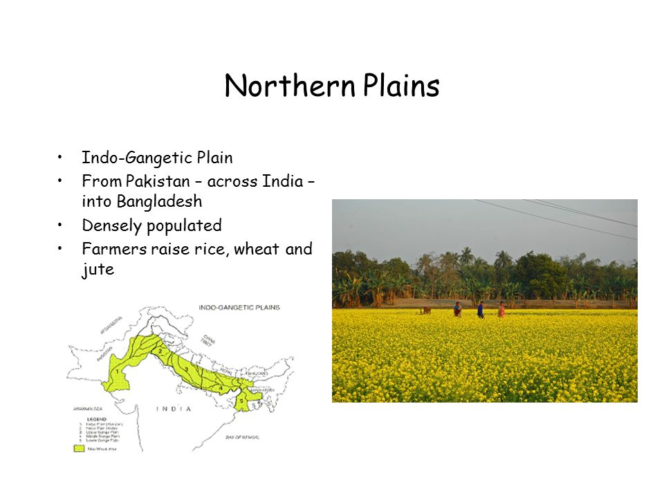 Northern Plains Indo-Gangetic Plain From Pakistan – across India – into Bangladesh Densely populated Farmers raise rice, wheat and jute
