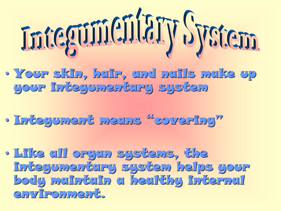 Your Skin Hair And Nails Make Up Your Integumentary Systemyour