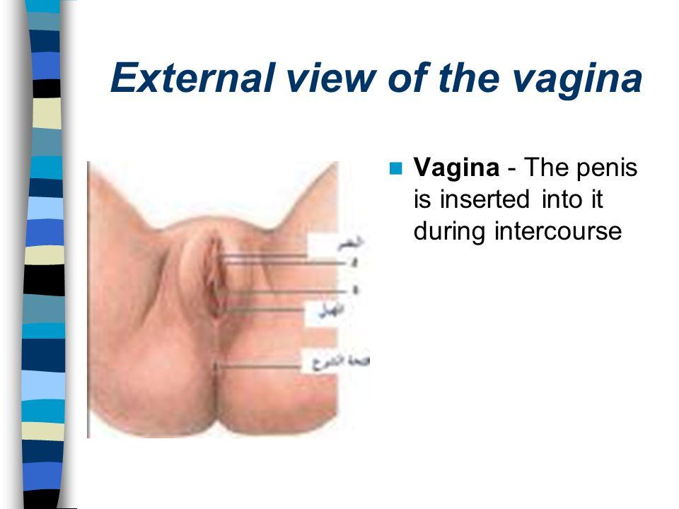 Insert penis