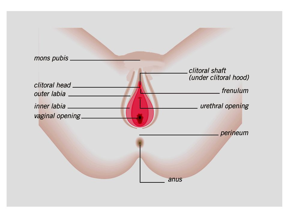 Male and Female Reproductive Systems. - ppt video online download