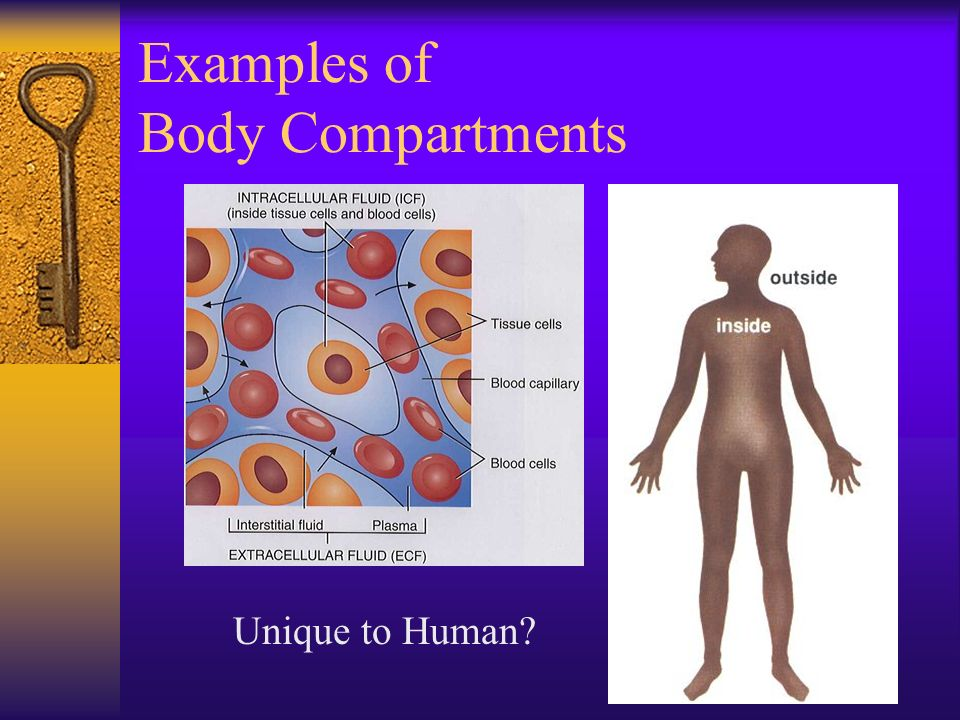 Examples of Body Compartments Unique to Human