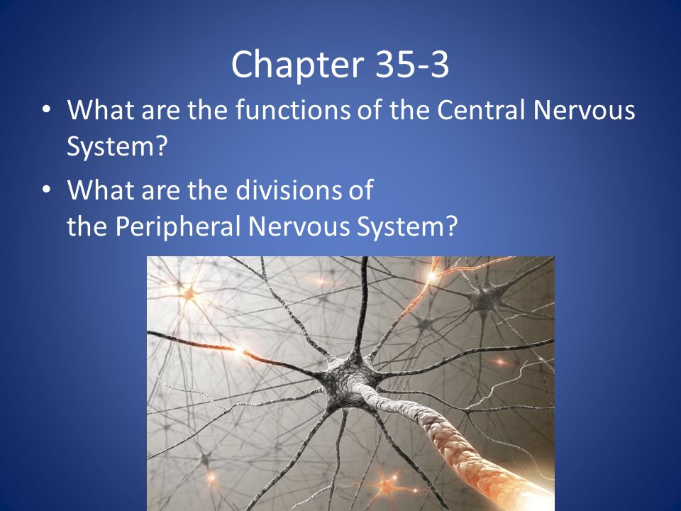 Chapter 35-3 What are the functions of the Central Nervous System.