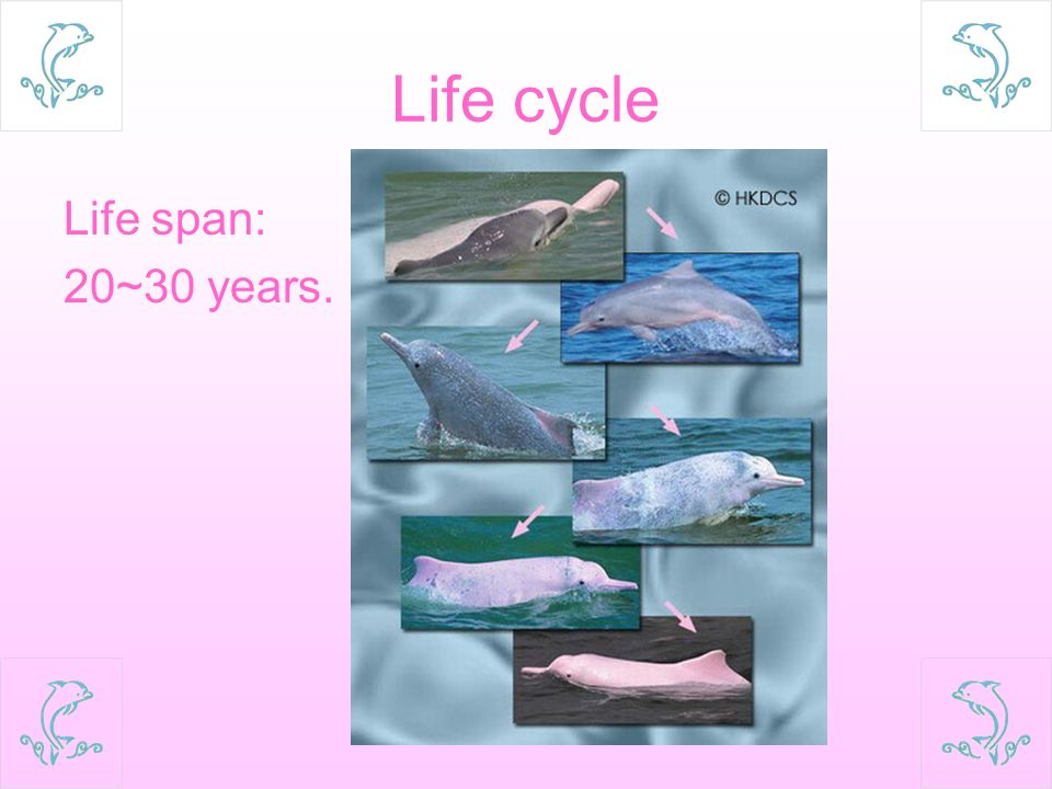 2 life cycle life span 2030 years