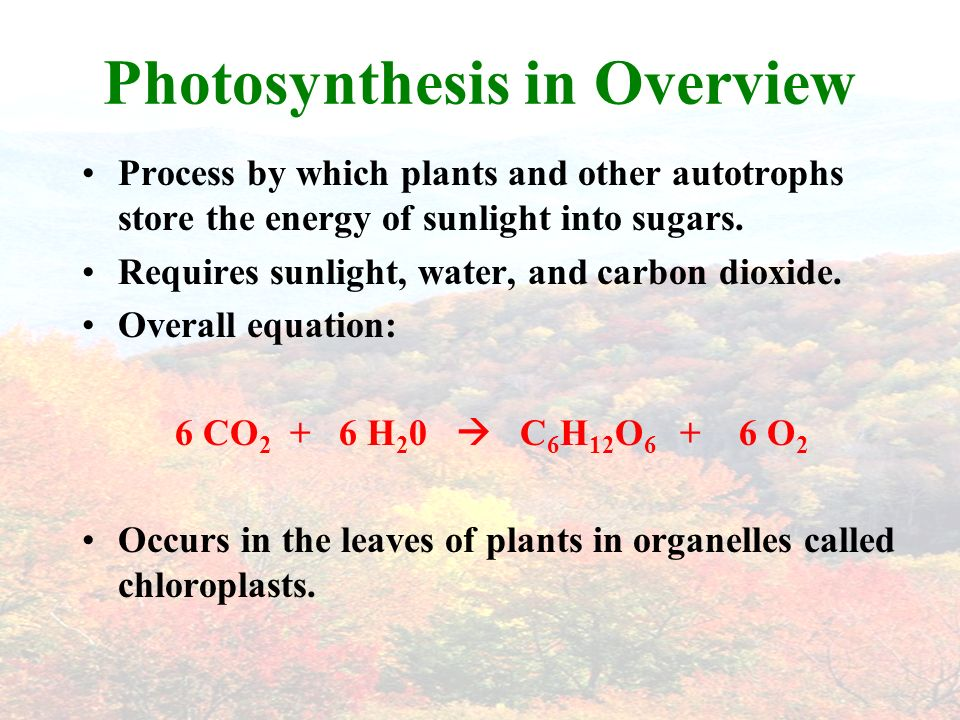 Photosynthesis in Overview Process by which plants and other autotrophs store the energy of sunlight into sugars.