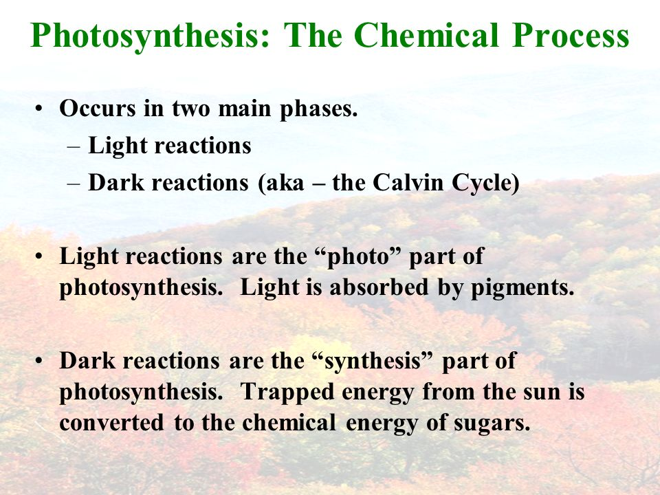 Photosynthesis: The Chemical Process Occurs in two main phases.
