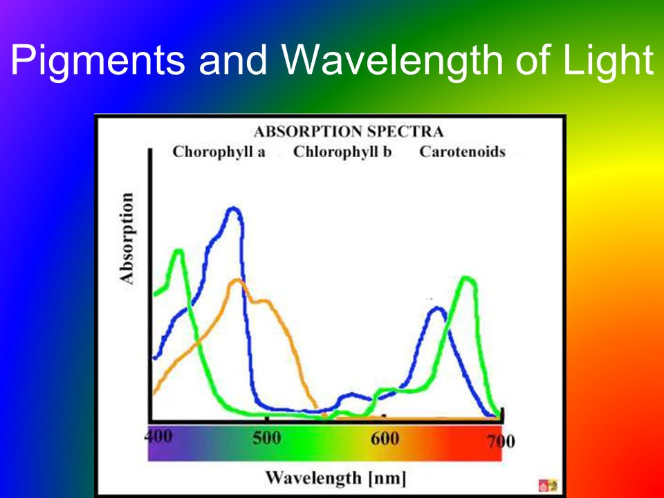 Pigments and Wavelength of Light