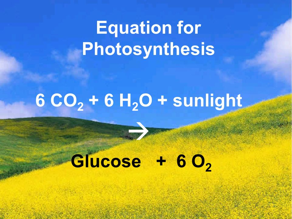 Equation for Photosynthesis 6 CO H 2 O + sunlight  Glucose + 6 O 2