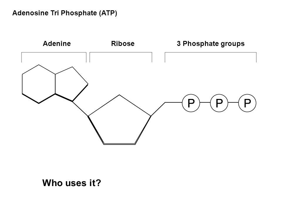 Light reactions ( read )   biology   ck-12 foundation.