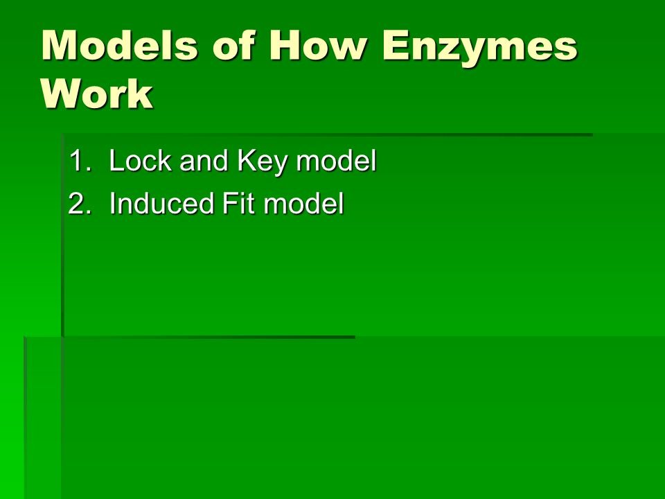 Models of How Enzymes Work 1. Lock and Key model 2. Induced Fit model