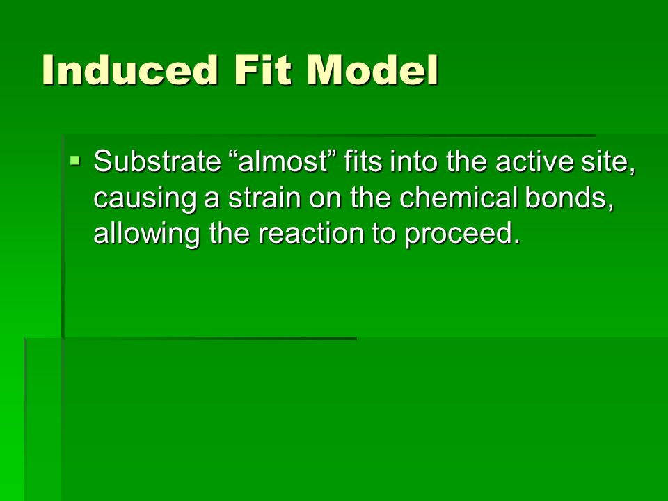 Induced Fit Model  Substrate almost fits into the active site, causing a strain on the chemical bonds, allowing the reaction to proceed.