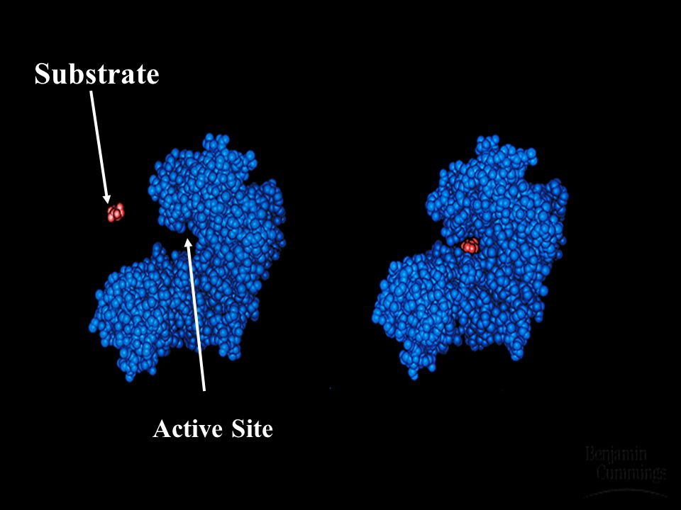 Substrate Active Site