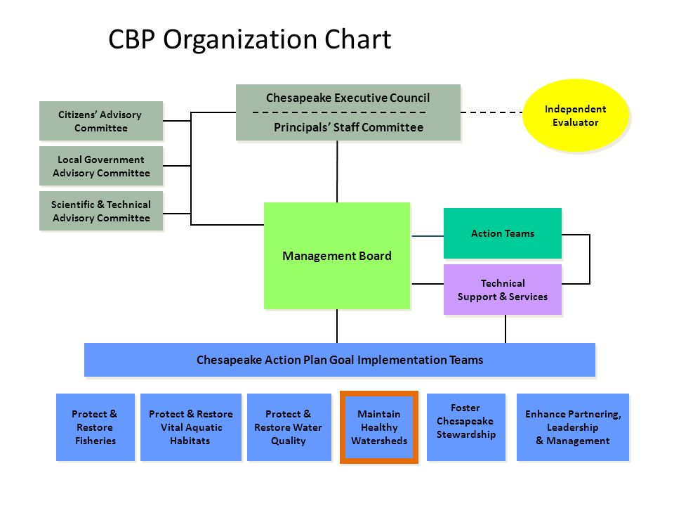 CBP Organization Chart Management Board Scientific & Technical Advisory Committee Scientific & Technical Advisory Committee Local Government Advisory Committee Local Government Advisory Committee Citizens' Advisory Committee Citizens' Advisory Committee Action Teams Maintain Healthy Watersheds Maintain Healthy Watersheds Protect & Restore Water Quality Protect & Restore Water Quality Protect & Restore Fisheries Protect & Restore Fisheries Protect & Restore Vital Aquatic Habitats Protect & Restore Vital Aquatic Habitats Foster Chesapeake Stewardship Foster Chesapeake Stewardship Chesapeake Executive Council Principals' Staff Committee Chesapeake Executive Council Principals' Staff Committee Independent Evaluator Independent Evaluator Chesapeake Action Plan Goal Implementation Teams Enhance Partnering, Leadership & Management Enhance Partnering, Leadership & Management Technical Support & Services Technical Support & Services