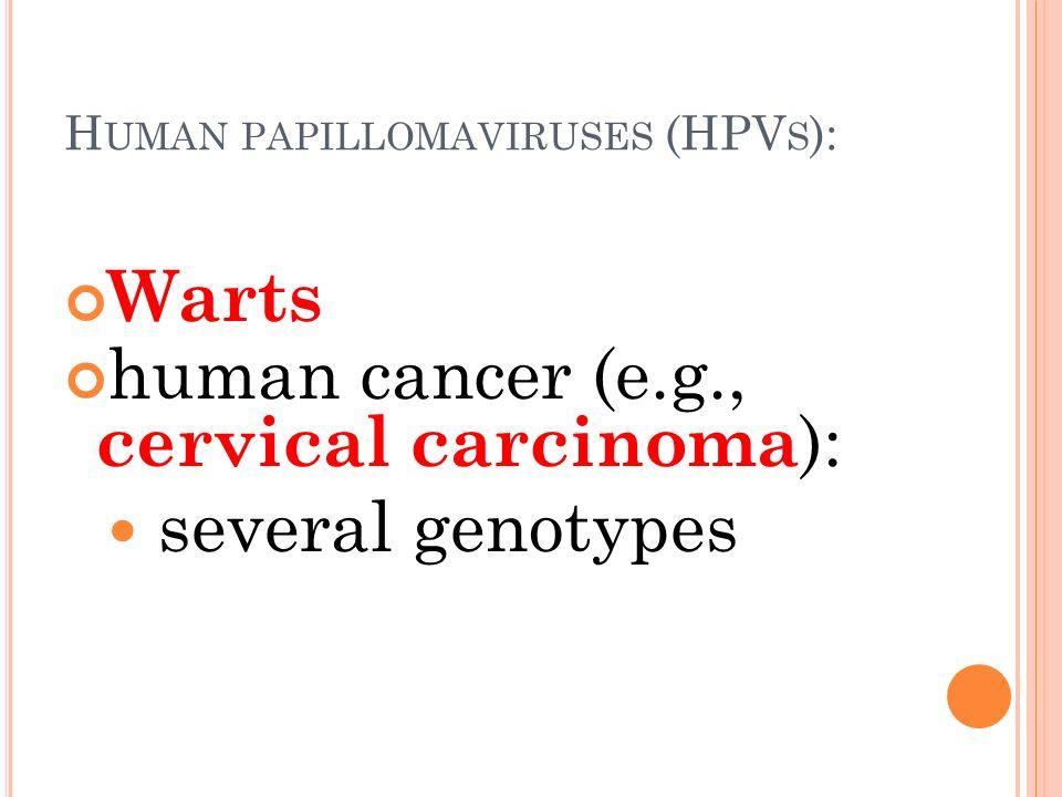 h papillomavírus