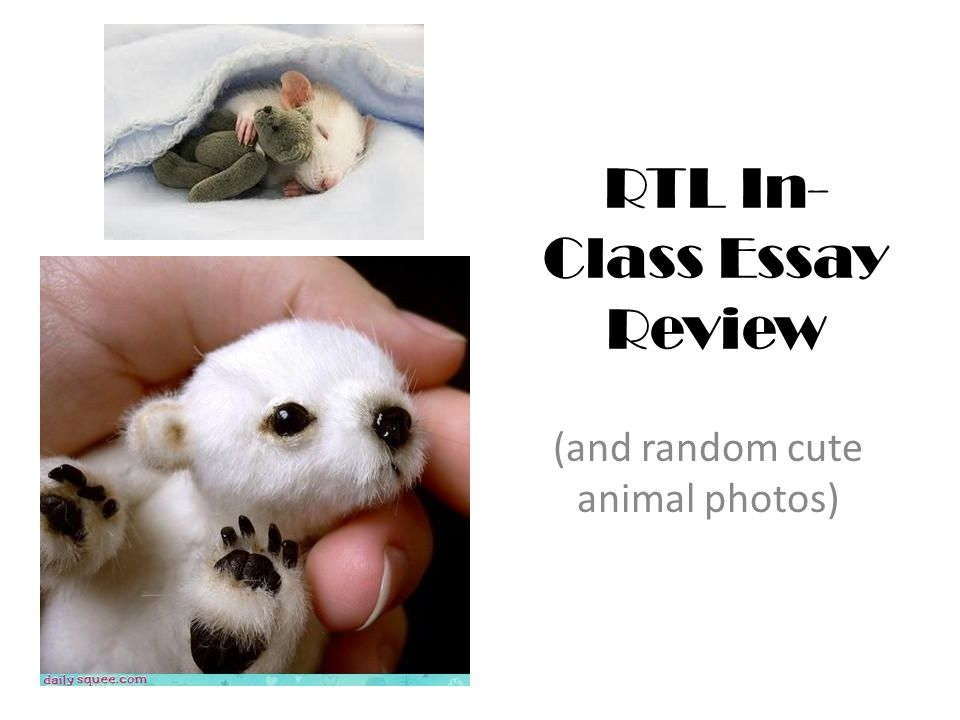 RTL In- Class Essay Review (and random cute animal photos)