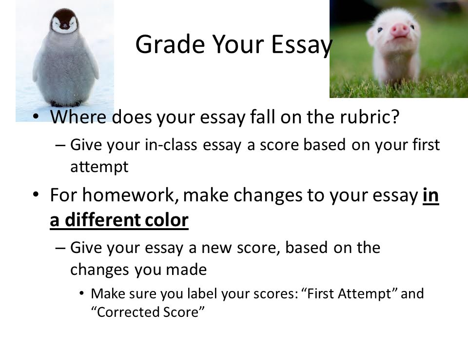 Grade Your Essay Where does your essay fall on the rubric.