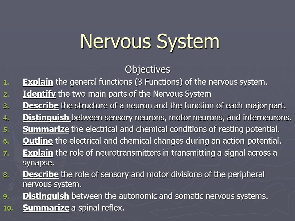 three general functions of the nervous system are