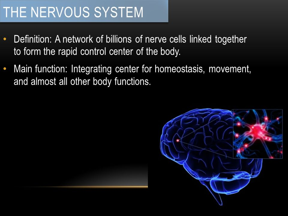 Definition: A network of billions of nerve cells linked together to form the rapid control center of the body.