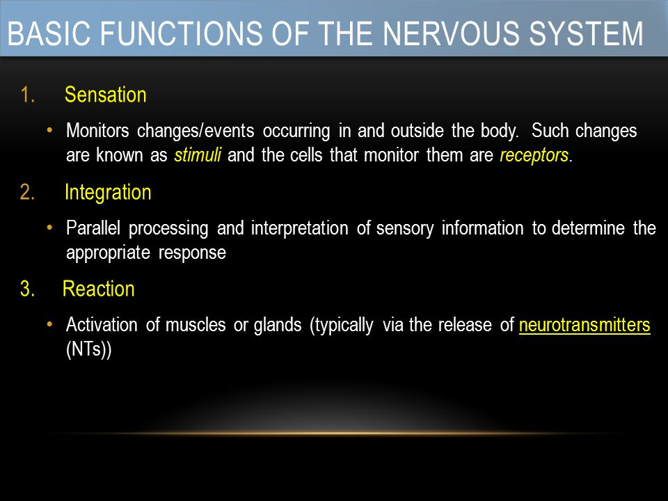 BASIC FUNCTIONS OF THE NERVOUS SYSTEM 1.Sensation Monitors changes/events occurring in and outside the body.