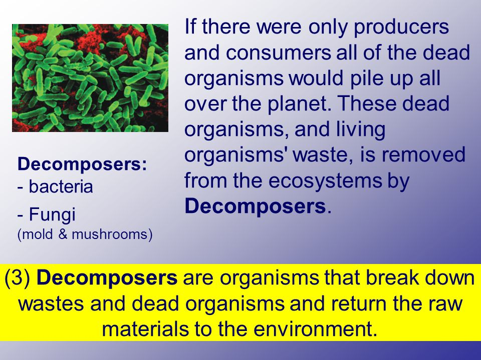If there were only producers and consumers all of the dead organisms would pile up all over the planet.