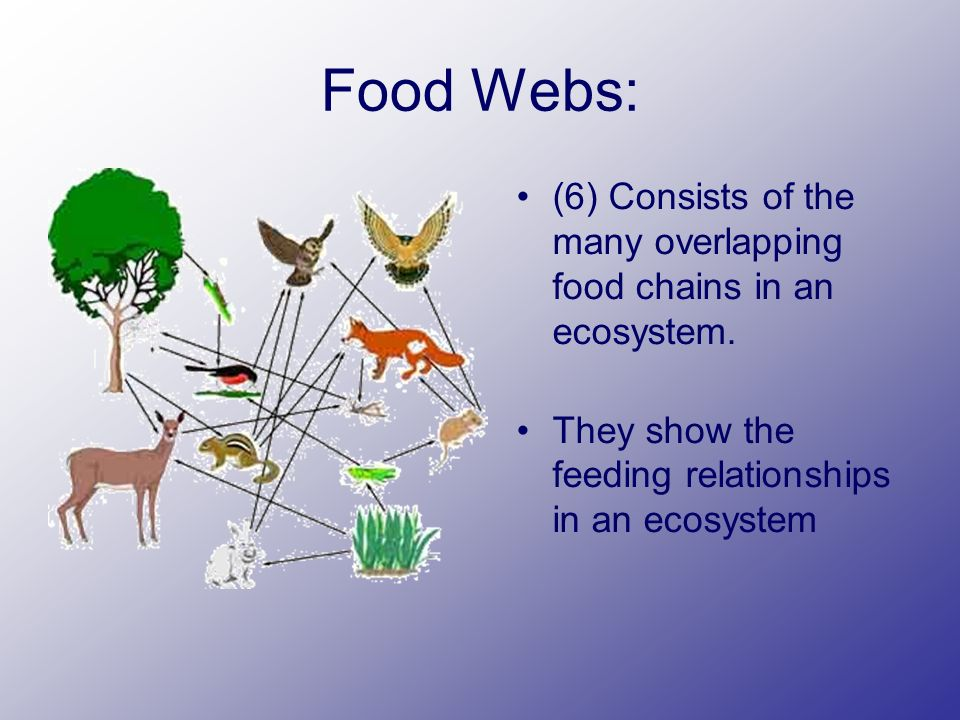 Food Webs: (6) Consists of the many overlapping food chains in an ecosystem.