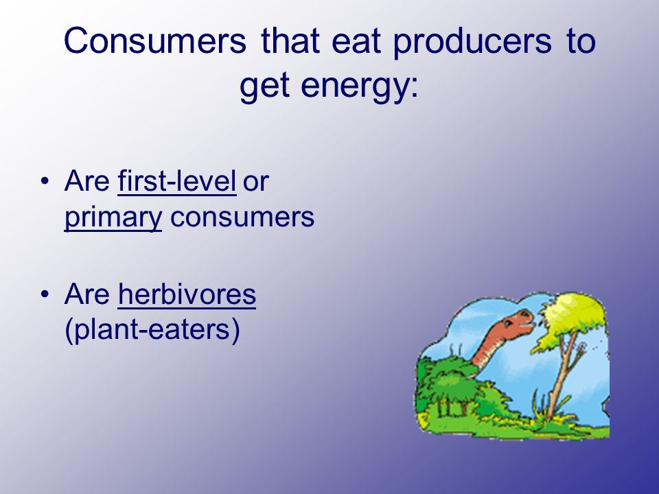 Consumers that eat producers to get energy: Are first-level or primary consumers Are herbivores (plant-eaters)