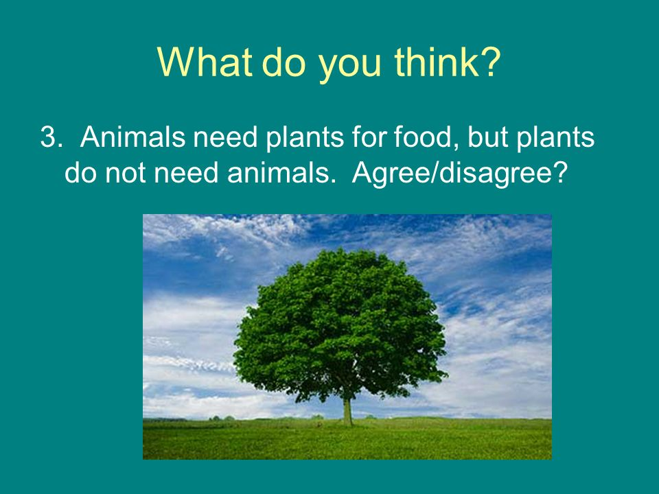 What do you think 3. Animals need plants for food, but plants do not need animals. Agree/disagree