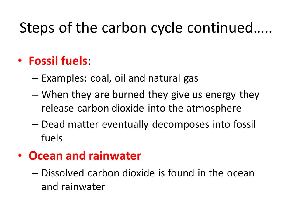 Steps of the carbon cycle continued…..