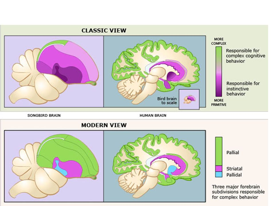 Brains and senses. - ppt download