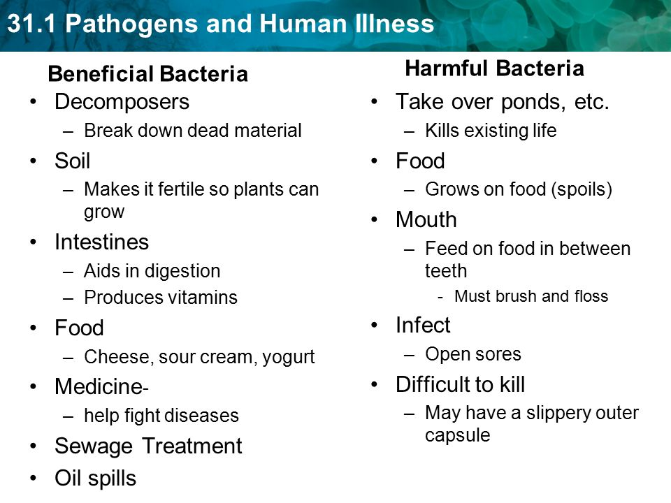 31.1 Pathogens and Human Illness Beneficial Bacteria Decomposers –Break down dead material Soil –Makes it fertile so plants can grow Intestines –Aids in digestion –Produces vitamins Food –Cheese, sour cream, yogurt Medicine - –help fight diseases Sewage Treatment Oil spills Harmful Bacteria Take over ponds, etc.