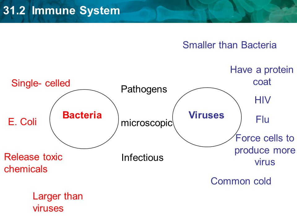 31.2 Immune System Single- celled Release toxic chemicals Larger than viruses E.