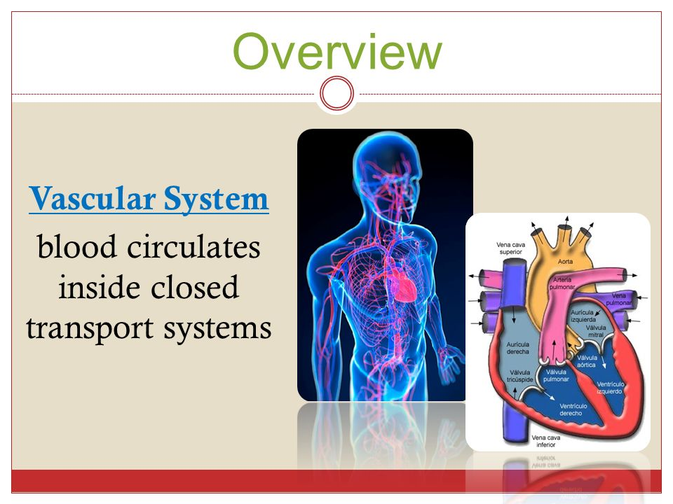 DAY 1 – CHAPTER 15 Cardiovas cular System. Overview Vascular System ...
