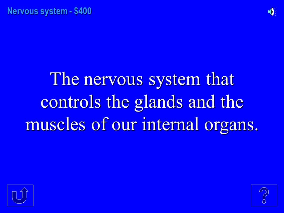Nervous System - $300 Our bodies primary information system.