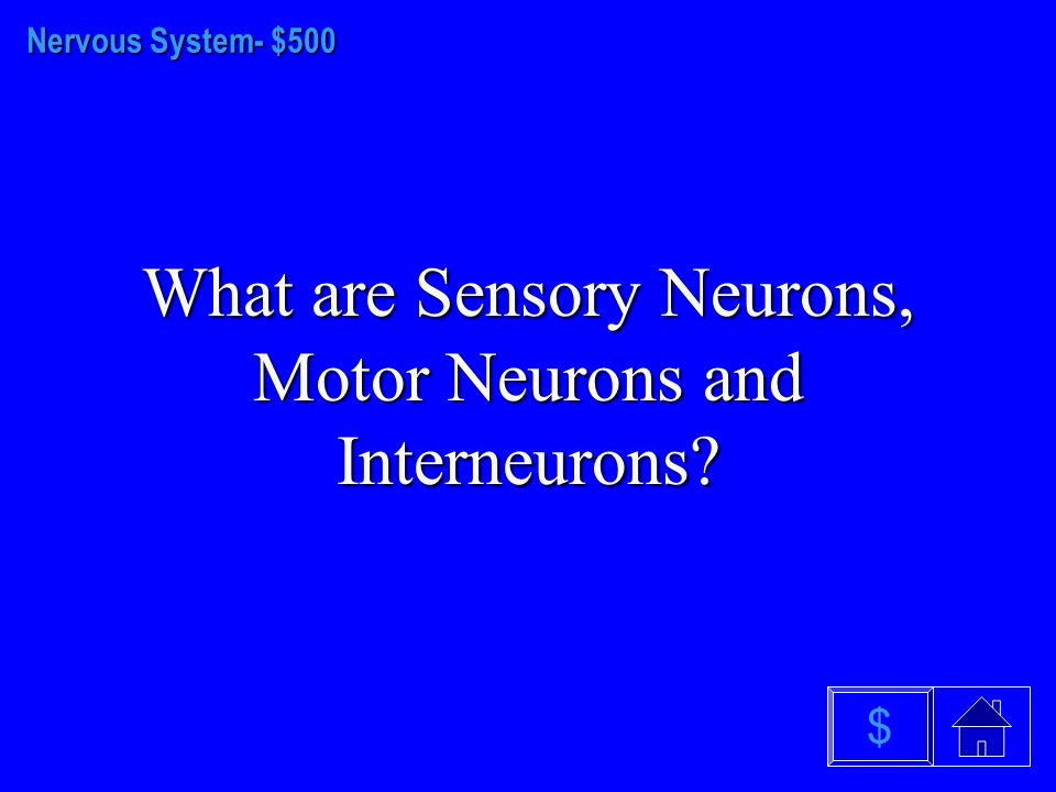 Nervous system - $400 What is the Autonomic Nervous System $