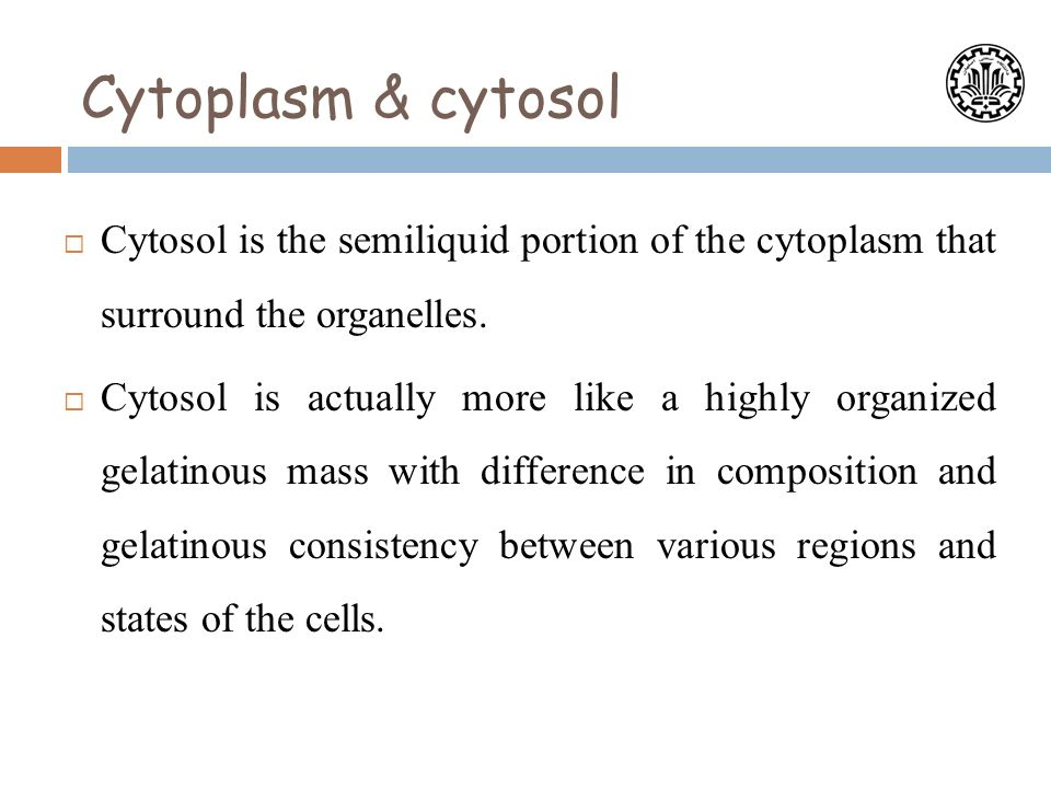 composition of cytoplasm
