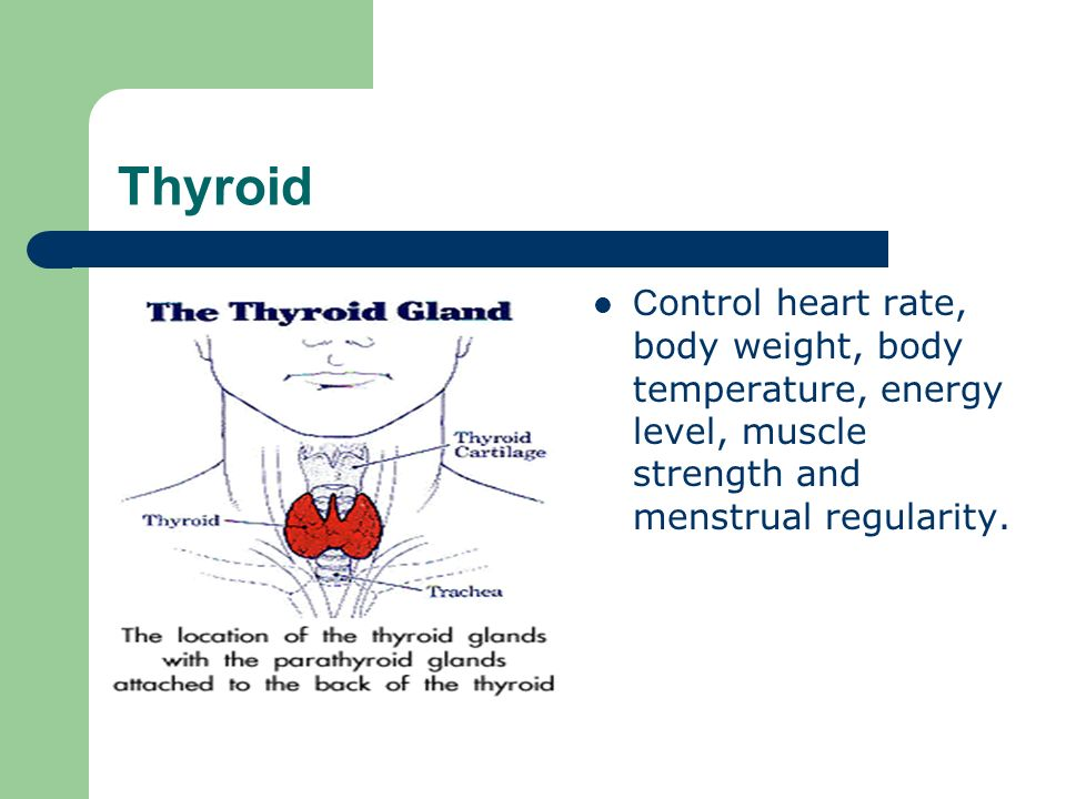 Thyroid C ontrol heart rate, body weight, body temperature, energy level, muscle strength and menstrual regularity.