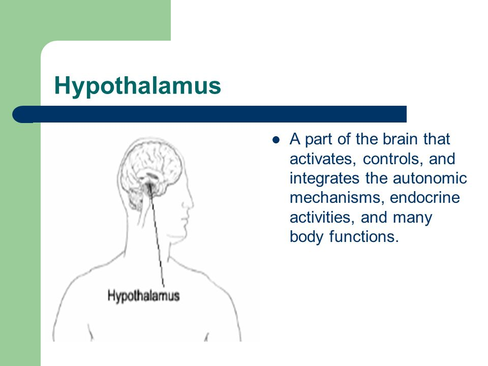 Hypothalamus A part of the brain that activates, controls, and integrates the autonomic mechanisms, endocrine activities, and many body functions.