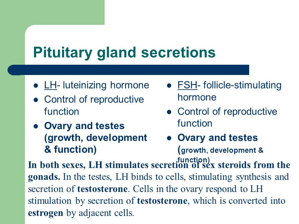 Pituitary gland secretions LH- luteinizing hormone Control of reproductive function Ovary and testes (growth, development & function) FSH- follicle-stimulating hormone Control of reproductive function Ovary and testes ( growth, development & function) In both sexes, LH stimulates secretion of sex steroids from the gonads.